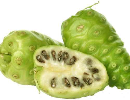 How to Get the Great Benefits of Noni Juice